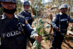 ATTENTION EDITORS THIS IS 7 OF 35 PICTURES FROM MYANMAR'S OPIUM WAR BY REUTERS PHOTOGRAPHER DAMIR SAGOLJ A policeman holds poppy plants after a field was destroyed above the village of Tar-Pu, in the mountains of Shan State January 27, 2012. Myanmar has dramatically escalated its poppy eradication efforts since September 2011, threatening the livelihoods of impoverished farmers who depend upon opium as a cash crop to buy food. With new ceasefires ending years of conflict between the government and ethnic insurgents, Myanmar police and United Nations officials are travelling through opium-rich Shan State to ask farmers what assistance they need. Picture taken January 27, 2012. REUTERS/Damir Sagolj (MYANMAR - Tags: DRUGS SOCIETY) - RTR2Y5ID