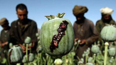 afghan_poppy003_16x9