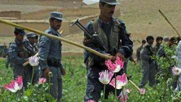afghan_poppy004_16x9