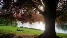berlin_tree001