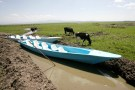 "Cattle graze in Lake Naivasha, the only fresh water ecosystem in the eastern Rift Valley, June 4, 2009, which is drying up due to the drought and pollution caused by large-scale flower farming. World Environment Day (WED) 2009 will be commemorated June 5, under the theme ""Your Planet Needs You, Unite to Combat Climate Change"". WED is one of the principal vehicles through which the United Nations stimulates worldwide awareness of the environment and enhances political attention and action. REUTERS/Thomas Mukoya (KENYA ENVIRONMENT SOCIETY ANIMALS) - RTR24A1C"