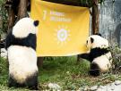 SDG 7 picture