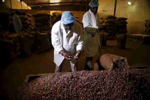 Factory officials take samples of cocoa beans at a cocoa processing factory in Ile-Oluji village in Ondo state, southwest Nigeria March 29, 2016. Picture taken March 29, 2016. REUTERS/Akintunde Akinleye - GF10000374278