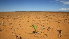 A maize plant is seen at a field in Hoopstad, a maize-producing district in the Free State province, South Africa, January 13, 2016. Mid-summer rains may be too little, too late for farmers as the South African countryside bakes under the worst drought in over a century. Last year was the driest on record. Picture taken January 13.   REUTERS/Siphiwe Sibeko - GF20000094826