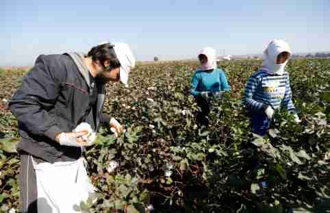 Syrian refugees pick up cotton from a field in the village of Bukulmez on the Turkish-Syrian border, in Hatay province, November 3, 2012. Despite the conflict on the Syrian side of the border, cotton harvest is still underway in Turkey's southern border province of Hatay. During early October, the Turkish military launched a retaliatory strike on Syria after a mortar bomb fired from Syrian soil landed in the countryside in Hatay. Some Syrian refugees work at cotton fields together with Turkish villagers in the border region as cottons pickers. Picture taken November 3, 2012. REUTERS/Murad Sezer (TURKEY - Tags: AGRICULTURE POLITICS) - GM1E8B509FD01