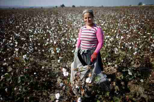 Turkish villager Sibel is pictured as she works in a cotton field near the border town of Reyhanli on the Turkish-Syrian border, in Hatay province, November 4, 2012. Despite the conflict on the Syrian side of the border, cotton harvest is still underway in Turkey's southern border province of Hatay. During early October, the Turkish military launched a retaliatory strike on Syria after a mortar bomb fired from Syrian soil landed in the countryside in Hatay. Some Syrian refugees work at cotton fields together with Turkish villagers in the border region as cottons pickers.  REUTERS/Murad Sezer (TURKEY - Tags: AGRICULTURE POLITICS)