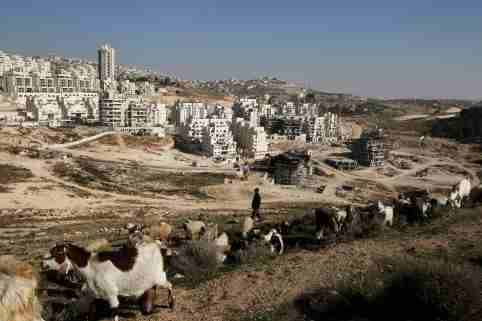 A Palestinian man herds sheep near a construction site at a Jewish settlement near Jerusalem known to Israelis as Har Homa and to Palestinians as Jabal Abu Ghneim December 19, 2011. Israel began seeking tenders to build more than 1,000 homes in the occupied West Bank on Sunday, part of a settlement plan it accelerated after Palestinians won recognition by a U.N. body, but a move which complicates a return to negotiations.REUTERS/Baz Ratner (POLITICS ANIMALS)