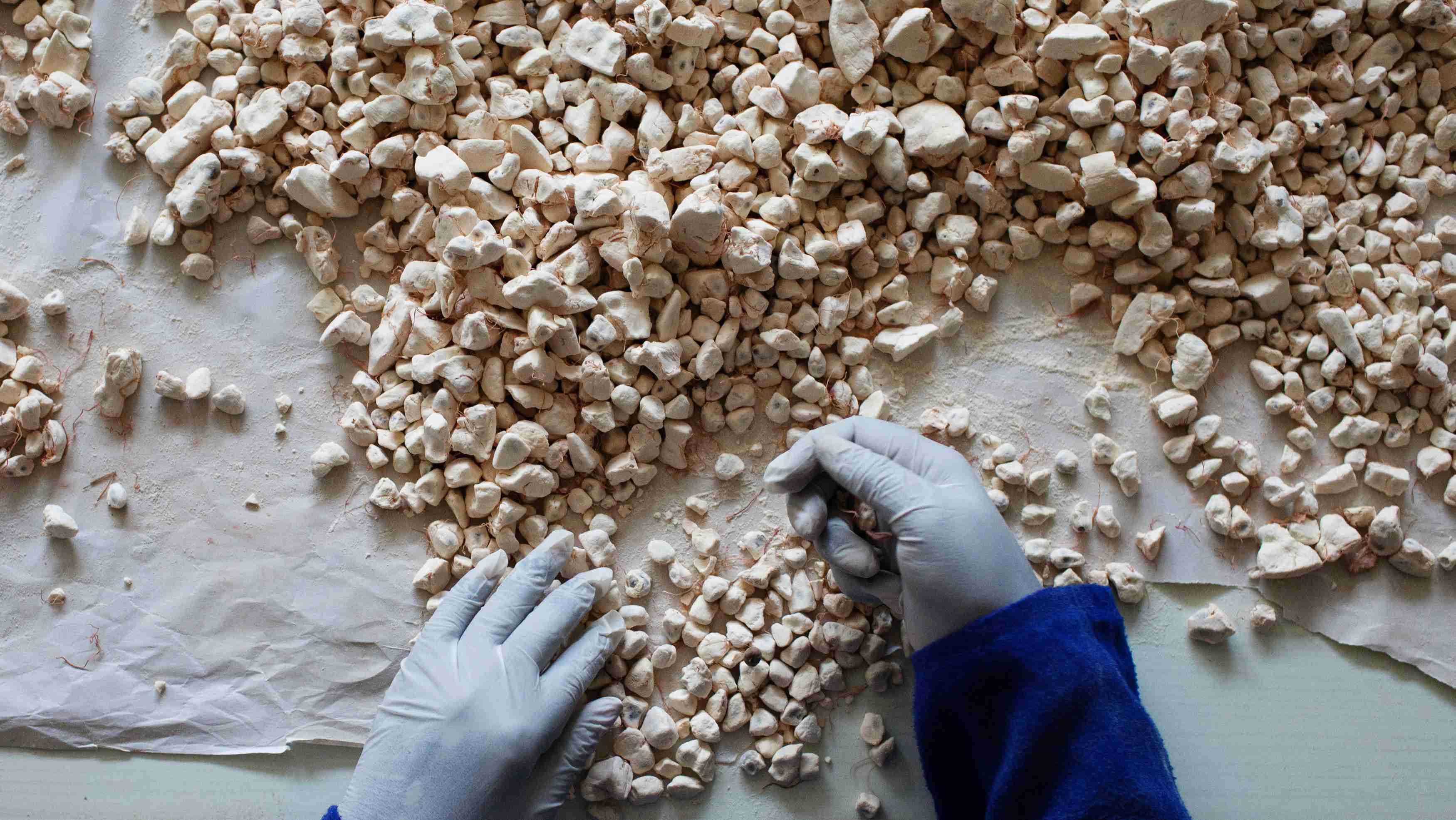 A worker sorts baobab fruit at the Bioessence factory, a cosmetic and nutrition company using baobab and shea products, in Dakar June 19, 2013. Bioessence exports many of its products to the United States. REUTERS/Joe Penney (SENEGAL - Tags: BUSINESS)