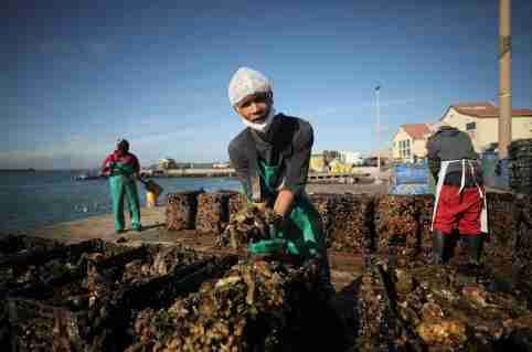 A worker cleans mussels farmed on aquaculture rafts in Saldanha Bay near Cape Town, South Africa, June 15, 2021. Picture taken June 15, 2021. REUTERS/Mike Hutchings