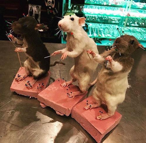 taxidermy rat class brooklyn