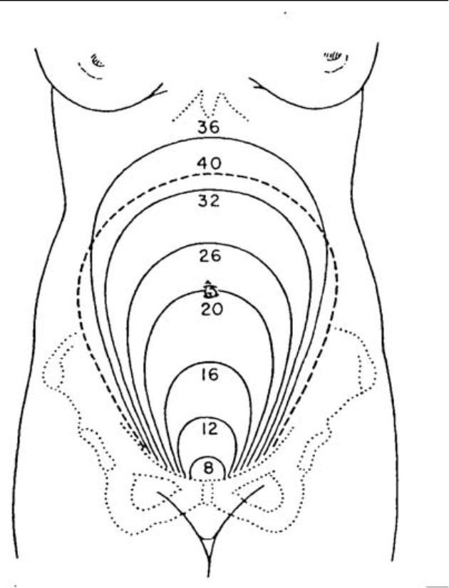 pregnant diagram
