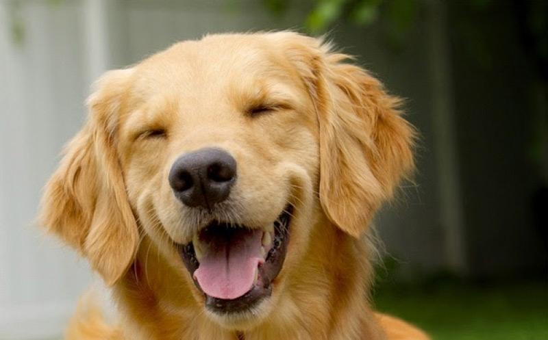4 ''χρυσοί'' κανόνες για τον σκύλο σας…Ρ.Ε.Κ.Ε (Ρουτίνα – Εκτόνωση – Κοινωνικοποίηση – Εργασία)