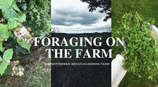 foraging northern ireland ballycastle