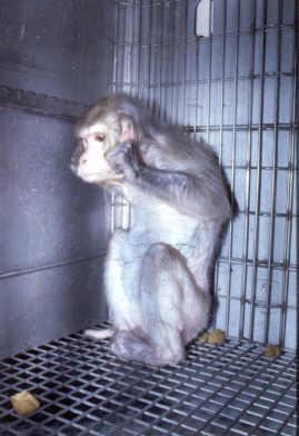 Laboratory Primate Newsletter Volume 43 Number 4