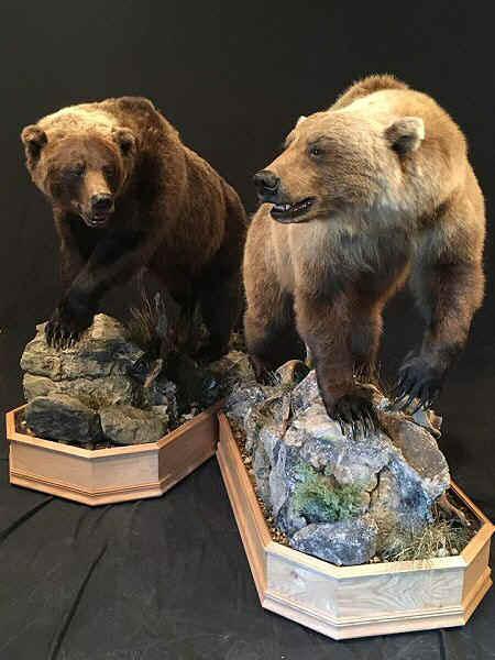 Bear TaxidermistBear TaxidermyBlack Bear Mount