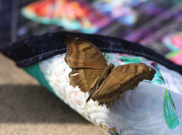 butterfly on my butterfly quilt