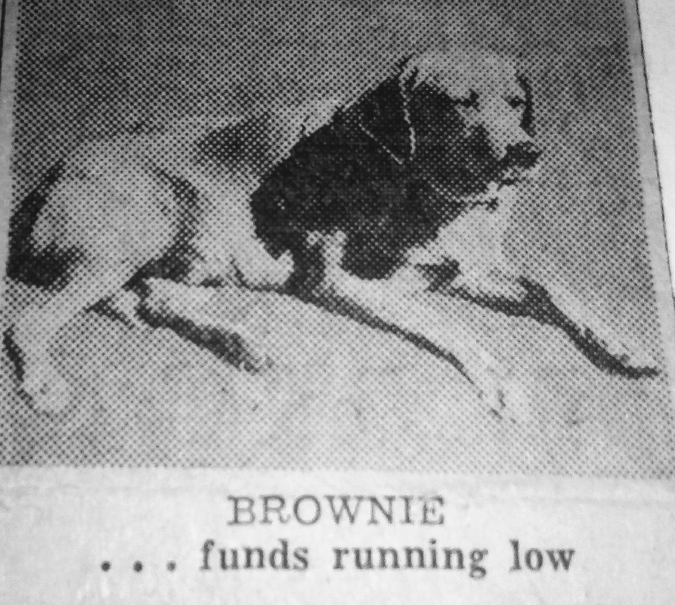 Brownie the town dog of Daytona Beach funds low