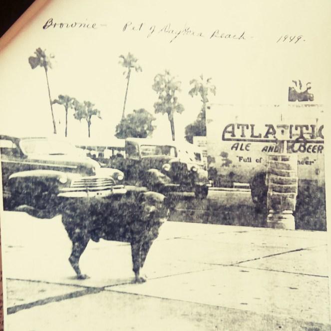 Brownie the Town Dog of Daytona Beach on Beach Street in 1949.