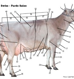 brown swiss association u003e breed u003e brown swiss breed u003e parts of the dairy cow body parts diagram dairy cow diagram [ 1100 x 865 Pixel ]