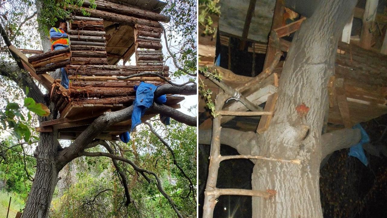 treehouse_1558727621205-873772846.jpg