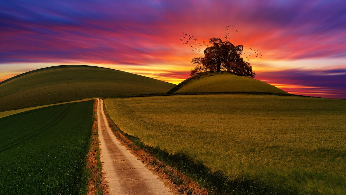 A path cuts through a field toward rounded hills. One has a spreading tree on with a flock of birds. In the background, a spectacular , mulit-cloured sunset beckons