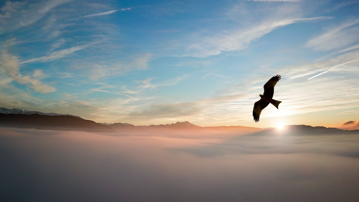 And eagle soars above a cloud filled valley and mountains beyond, signifying possibilities and successful results