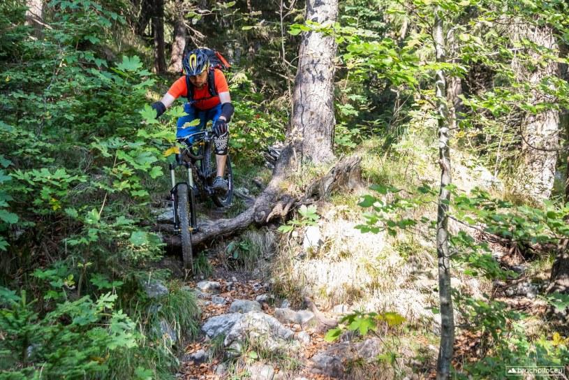 Eine der vielen Wurzelstufen im unteren Teil des Trails...