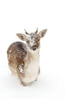 vinterbryllup-inspirasjon-brudeblogg