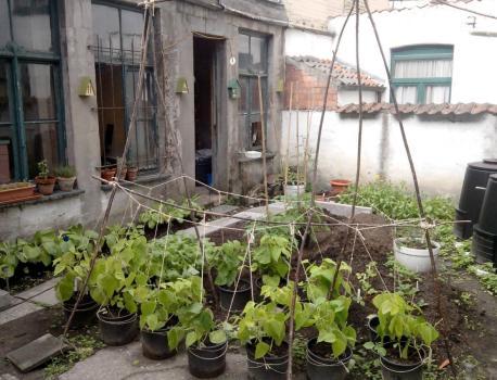 vrijwilligers voor stadstuin met permacultuur gezocht…