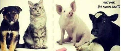 Waarom het ene konijn het andere niet is