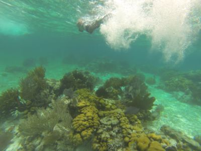 Koraal Mesoamerican Reef Caye Caulker