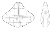 La courbe lombaire supportée par un coussin lombaire