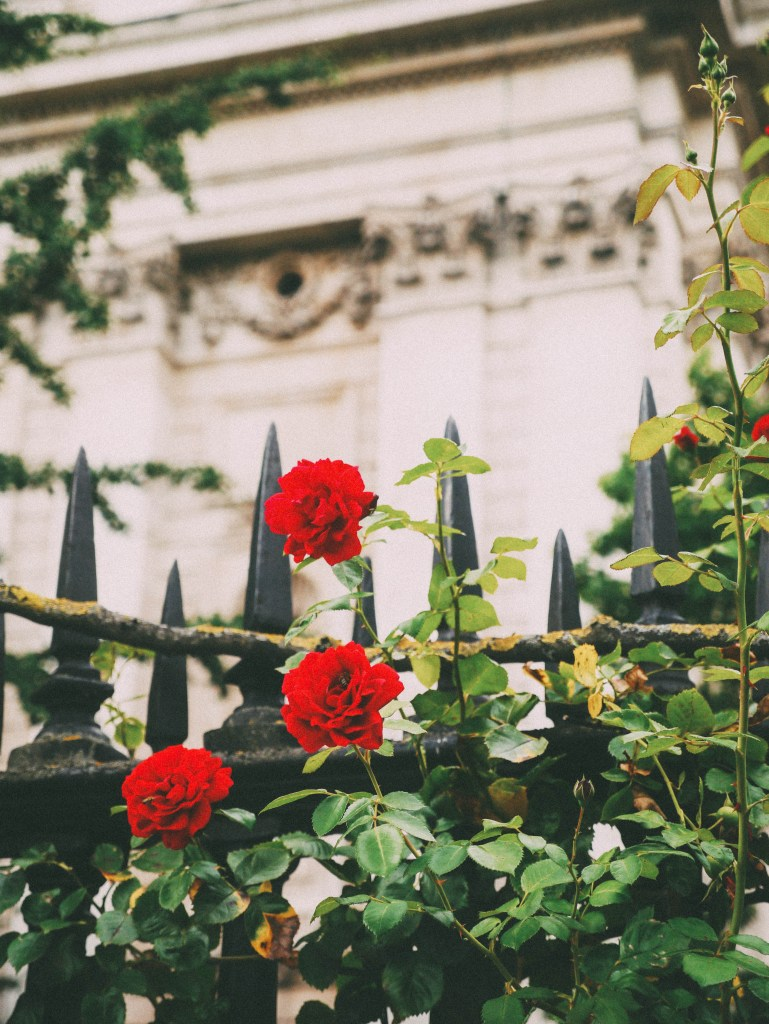 roses on a fence - london, summer break 2017 | brunch at audrey's