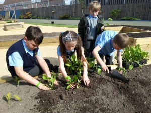 Gardening sessions with Primary School pupils.