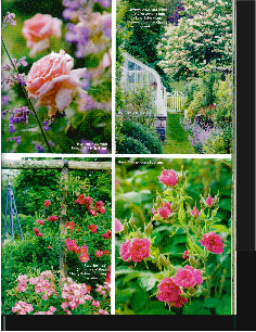 Perfect Country Gardens 4