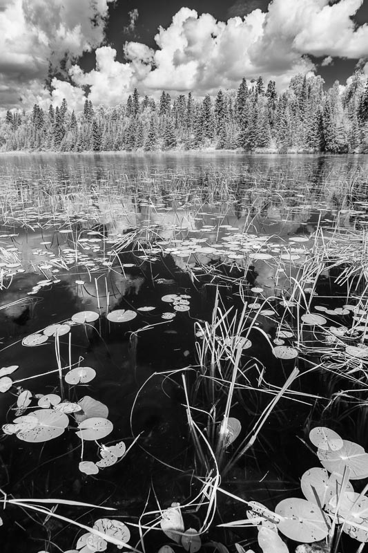 infrared lily pads