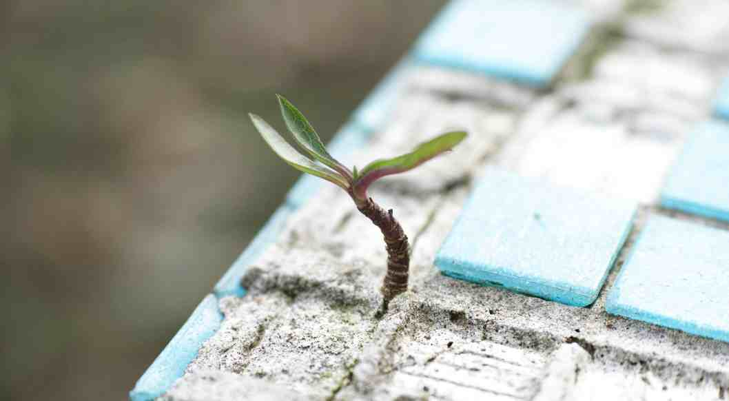 how keep marriage strong plant growing through ceramic tile