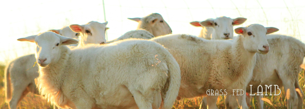 2014headerbanner-lamb