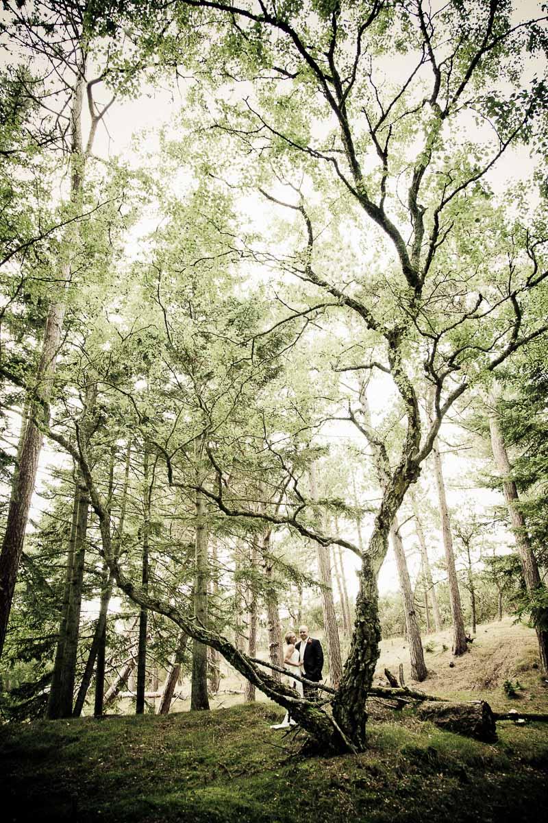 portrætter i skoven