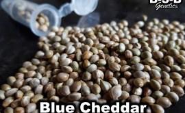 b-s-b blue cheddar seeds poster