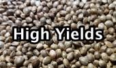 001 high yields