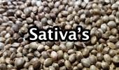 001 sativa's