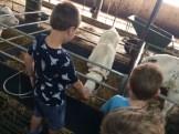foto 5 boerderij