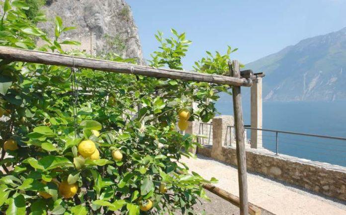Una caratteristica limonaia sul lago di Garda