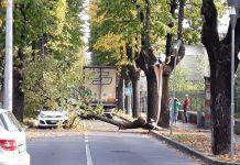 Il pesante ramo caduto in via Marconi, a Rovato