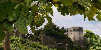 Il vigneto Pusterla di Brescia, ai piedi del Cidneo, premiato dall'Unesco