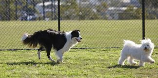 Un'area per lo sgambamento dei cani a Brescia