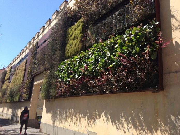 Un giardino verticale