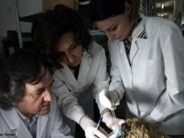 Equipe di ricercatori al lavoro sulle teste di mummia a Brescia, foto da ufficio stampa