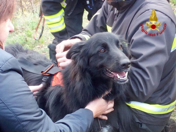 Zone, intervento dei Vigilli del fuoco per salvare un cane caduto in un dirupo, foto Vigili del fuoco